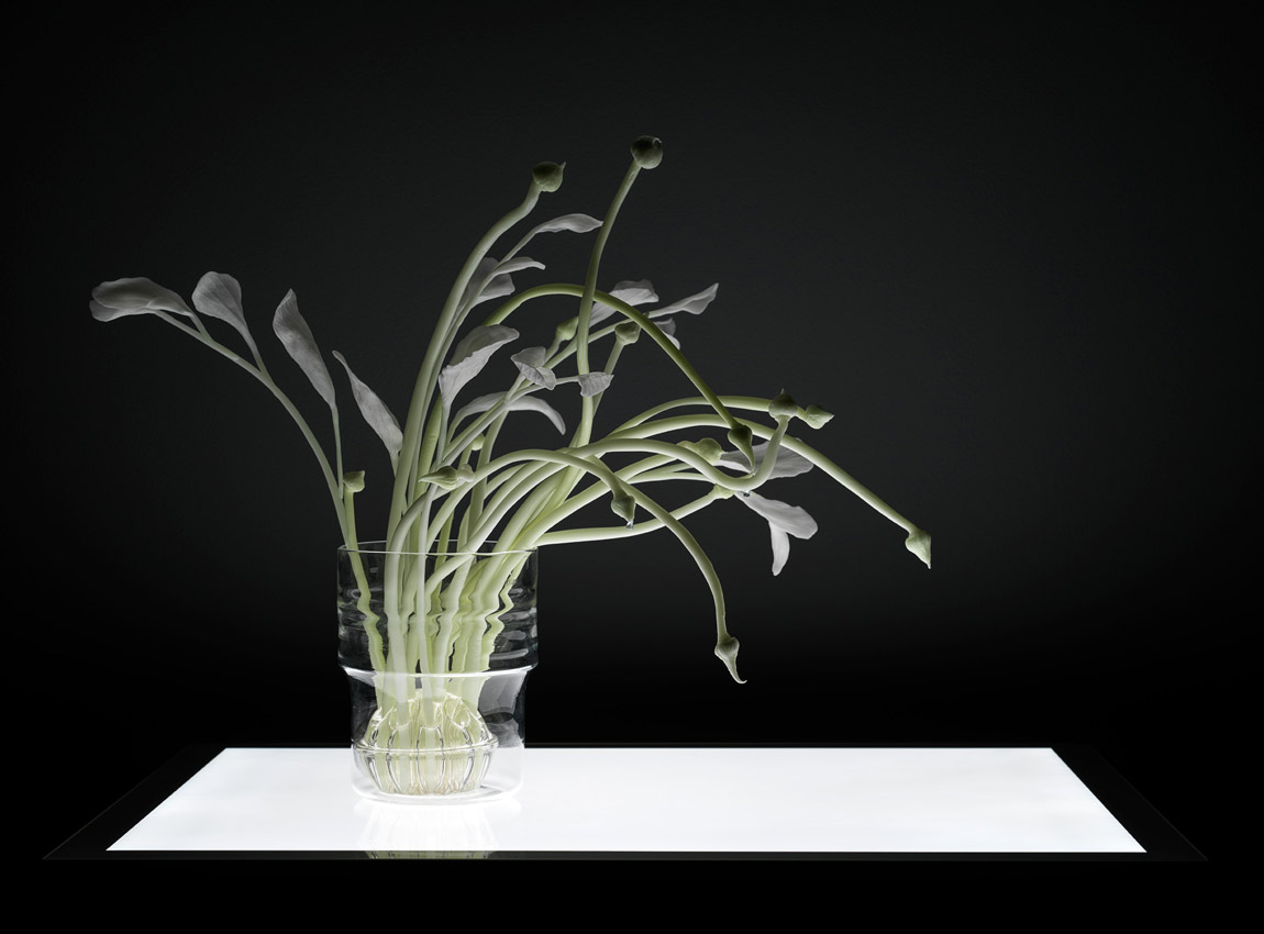 Glowing plant light sculpture by Catherine Truman